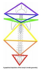 Chiropractic Louisville CO graphical depiction of the body's geometry